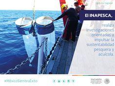 El INAPESCA, realiza investigaciones orientadas a impulsar la sustentabilidad pesquera acuícola. SAGARPA SAGARPAMX #MéxicoSiembraÉxito