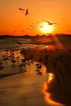 Seagulls at the sunset beach / nature / landscape photography Amazing Sunsets, Amazing Nature, Beautiful Sunrise, Belle Photo, Beautiful Landscapes, Beautiful World, Nature Photography, Landscape Photography, Night Photography