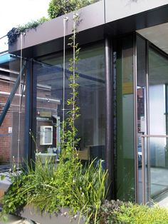 Green facades in small spaces | Tensile Design  Construct Tensile.com.au