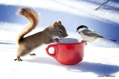 Squirrel and chickadee. Photo by Andre Villeneuve.