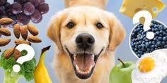Can Dogs Eat Blueberries And Cherries