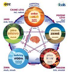 OSLABENÉ ORGÁNY príznaky - Zdravá výživa, analýza a detoxikácia tela, poraden Feng Shui, Detox, Health Fitness, Cleanse Diet, Tips, Organization, Google, Medicine, Organisation