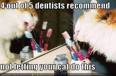 4 out of 5 dentists recommend not letting your cat do this!