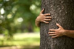 Blessed be the tree-huggers for their shall know the feel of bark. Real Wood, Environmentalist, Good Things, Poems, Blessed, Campaign, Floor, Medium, Children