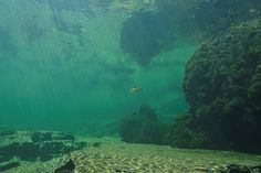 Viecht am Traunfall snorkeling in Austria Heart Of Europe, Snorkeling, Austria, Around The Worlds, River, Explore, Outdoor, Summer Vacations, Alps