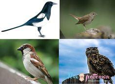 Болтливая… сорока.    Мудрый … филин.    Голосистый … соловей.    Шустрый… воробей. Birds, Animals, Animales, Animaux, Bird, Animal, Animais