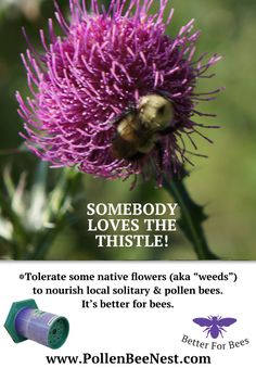 Tolerate Weeds for Pollen Bees