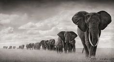 Elefantes en el Parque Nacional de Amboseli de Kenia, fotografía de Nick Brandt