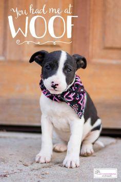 Adopt a #puppy! www.lifelinepuppy.org
