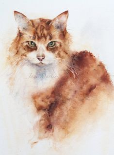 Ginger and white cat Watercolour painting