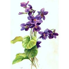 Whats To Love About Miniature Embroidery? Violet Flower Tattoos, Violet Tattoo, Art Floral, Botanical Drawings, Botanical Prints, Flower Drawings, Purple Flowers, Spring Flowers, Flower Prints