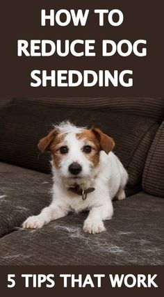 Dogs leave their mark, shedding hair throughout the home. Keep it clean with tips for removing dog hair from floors, furniture and clothes and reducing dog shedding. Dog Shedding Remedies, Stop Dog Shedding, Dog Clicker Training, Dog Training, Best Dog Toys, Best Dogs, Dog Breeds Little, Pet Shed, Dog Cleaning