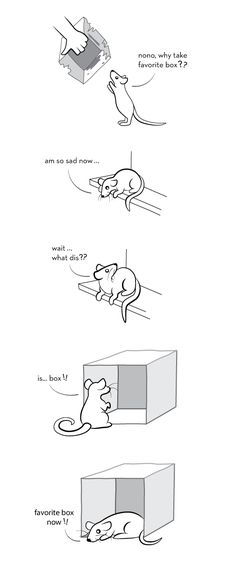 The Boxening Part II: A Tale of Love and Loss #aww #cute #rat #cuterats #ratsofpinterest #cuddle #fluffy #animals #pets #bestfriend #ittssofluffy #boopthesnoot