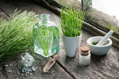 Horsetail is a perennial plant that belongs to the only living genus Equisetum in the Equisetaceae family. Increase Bone Density, Wild Yam, Calcium Supplements, Spine Health, Dried Figs, Healing Herbs, Plant Needs, Herbal Remedies, Grapefruit