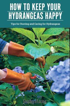 Garden Yard Ideas, Lawn And Garden, Garden Projects, Garden Tips, Garden Layouts, Garden Shrubs, Flowering Shrubs, Garden Trellis, Growing Flowers