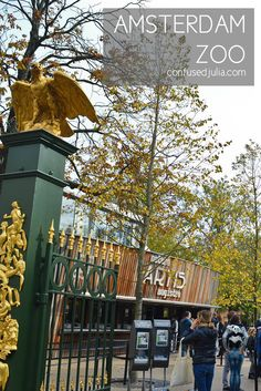 Exploring the Amsterdam Artis Zoo - a great day out for everyone, but especially families!