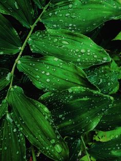 One of many great free stock photos from Pexels. This photo is about water drops, waterdrops, wet Big Leaves, Green Leaves, Plant Leaves, Falling Leaves, Green Leaf Wallpaper, Nature Wallpaper, Leaves Wallpaper, Water Drop On Leaf, Leaf Photography