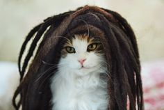 Jamaican Cat (rasta,rastafari,reggae,cat,jamaica,dreadlock)