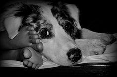Dog's Best Friend by Amy Larson