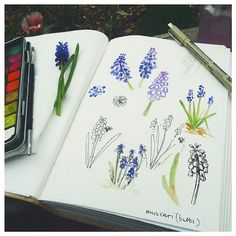 Starting a daily outdoor sketch challenge today for the summer months. I'll be pressing flowers and foliage along the way to add into my sketchbook when they're ready.  #dailysketch #sketchbook #muscari #flowers #art #illustration #outdoorsketching #pleinair #artwork #flowerpressing #sketchandpress