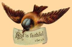 The Birds Sing Praises To God