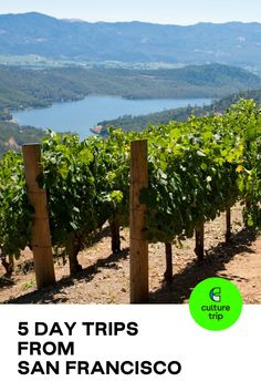 Escape to nature for the day to bask in the magic of vast oceans, dense forests and romantic wine country. Culture Trip presents five of the best day trips from San Francisco. . . #CultureTrip #ForCuriousTravellers #CultureTripExperiences #California #CaliforniaDreaming #Vineyards #WineTasting  #Napa #NapaValley #Berkeley #Bodega Bay #Monterey #Carmel. #Travel Photo: Philary / Getty Images City Of Monterey, San Francisco Travel Guide, Famous Wines, Bodega Bay, Fishing Villages, Whale Watching, Walking In Nature, Walking Tour, Wine Country