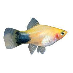 18 Best Fish Tank Ideas Images Fish Tanks Aquarium Aquarium Ideas