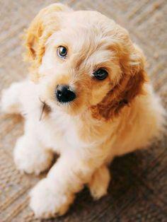 Dog Training Tips Videos  #BHGSummer