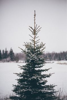 Christmas Tree   Soho House Christmas