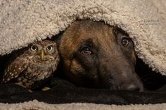 A dog and owl, named Ingo and Poldi, under a blanket.