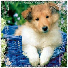 Cute pretty dog
