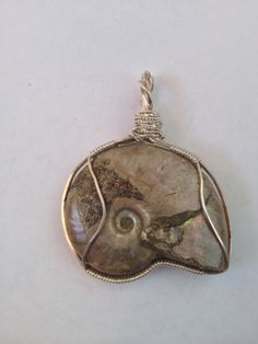 Ammonite fossil hand wrapped by laurie