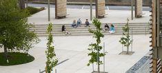 The Nueva School — Andrea Cochran Landscape Architecture Outdoor Spaces, Outdoor Decor, Jpg, The Expanse, Landscape Architecture, The Locals, Creative Art, Lighting Design, Design Elements