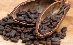 La historia del cacao mexicano y su vuelta al mundo