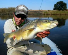 Great sized smallmouth yellowfish. Proudly South African specie. Asian Fish Recipes, Recipes With Fish Sauce, Whole30 Fish Recipes, White Fish Recipes, Easy Fish Recipes, Corvina Fish Recipes, Walleye Fish Recipes, Swordfish Recipes, Walleye Fishing Tips
