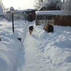 A brave dog! – Gif Funny