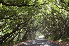 Tree lined
