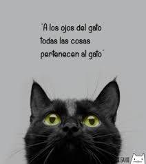 Resultado de imagen para frases con gatos