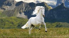 horses - Buscar con Google