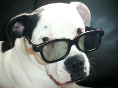 Elvis Costello Dog