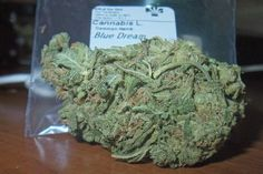 Blue Dream – My Cult Classic Of Weed