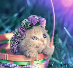 Kitty with Easter bonnet