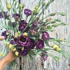 List of flowers we grow on the farm, by season. List Of Flowers, Spring Bulbs, How To Get Warm, Spring Flowers, Evergreen, Peonies, Wedding Flowers, Floral Wreath, Bloom