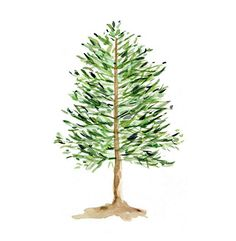 Pine Tree Print of original watercolor painting by TheJoyofColor, $21.00