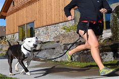 Correa para correr con el perro: adiós ataduras #fitness #health #sports