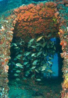 Fishing Reefs in Florida. Ancient Mariner wreck off Deerfield Beach