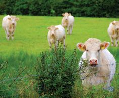 Eating Meat for the Environment