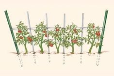 Florida Weave - finally found the name of the method I want to grow my tomatoes . Florida Weave – finally found the name of the method I want to grow my tomatoes gardening Veg Garden, Garden Trellis, Edible Garden, Vegetable Gardening, Potager Garden, Pea Trellis, Veggie Gardens, Fruit Garden, Tomato Vine