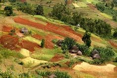 The village of Abraha Atsbeha in northern Ethiopia - working with the World Food Programme to create a future through the transformation of farmland. World Food Programme, Types Of Houses, Ethiopia, Agriculture, Vineyard, Golf Courses, Africa, Urban, Nature