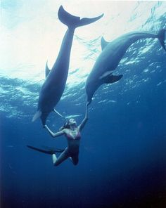 She is mostly known for her free diving skills, but I admire her for the fact that she is an ocean adventurer, a marine conservationist, a … Adventure Awaits, Adventure Travel, Delphine, To Infinity And Beyond, Ocean Life, Belle Photo, Under The Sea, Overwatch, Wonders Of The World